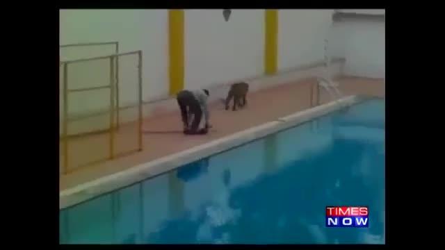 Леопард повредил шест лица во училиште во Индија